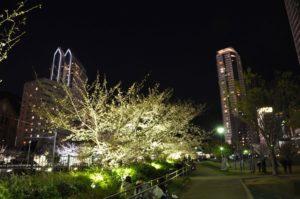 エリンサーブお花見会-2019-3