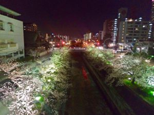 エリンサーブお花見会-2019-5